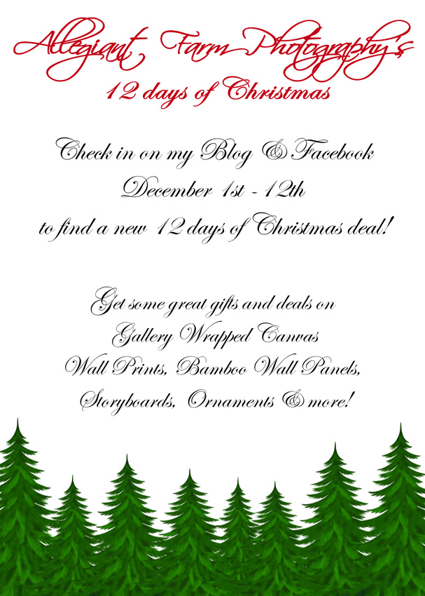 12 days of christmas specials.Announcement-12